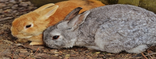 Feeding your Pet Rabbit