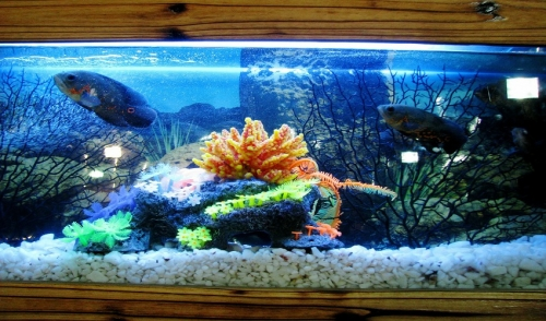 Ways to Keep Your Aquarium Clean