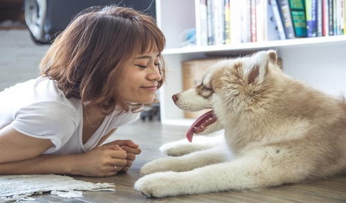 How to Help With Your Pet's Shedding