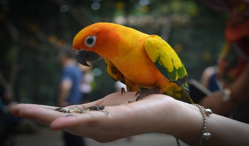 Choosing an Exotic Pet