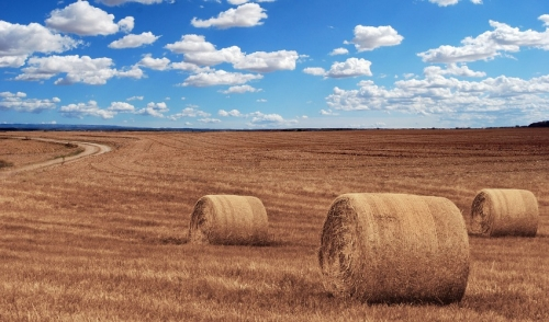 The Importance of Selecting Quality Hay