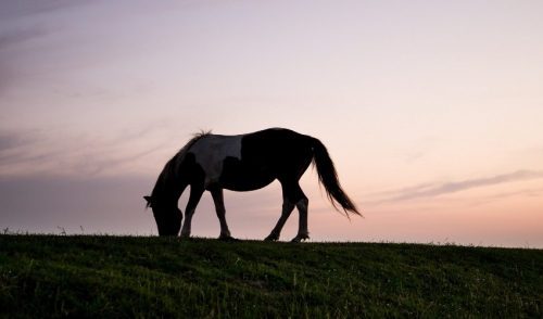 How Climate Change Effects Horses – And How to Tame It
