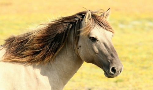 Keep Your Horses Free of Parasites