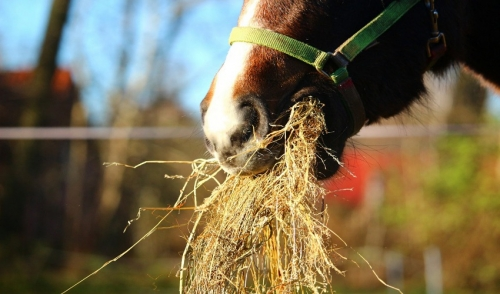 Overcome Your Horse's Picky Eating