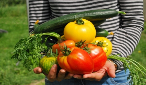 Vegetables to Plant in Midsummer
