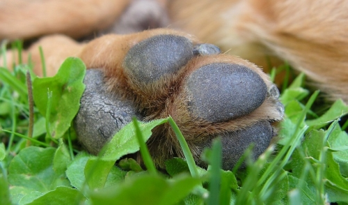 Tips for Taking Care of Your Dog's Paws