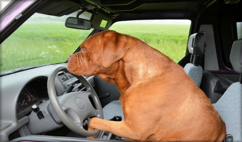 Tips for Travelling with Dogs in Cars