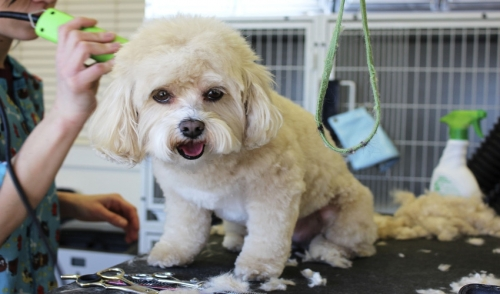 If You're Shaving Your Dog – Don't!