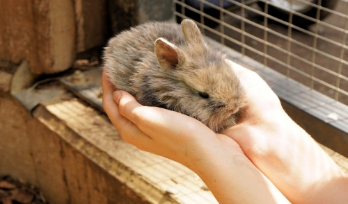 Pet-proofing a Room for Small Animals