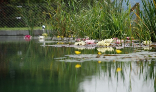 Closing Time: Shut Down Your Pond Easily and Safely
