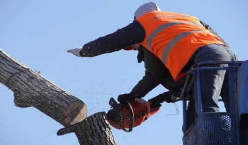 We Have Everything You Need For Tree Maintenance