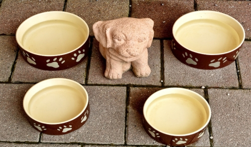 Pros and Cons of Different Dog Bowls