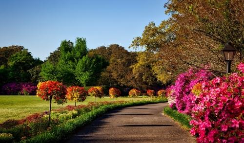 November Garden Ideas