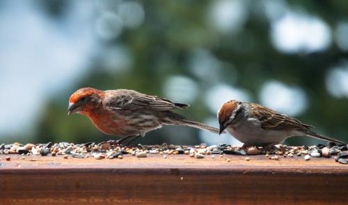 Birdfeeding on a Budget