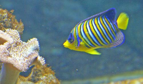 Choosing an Aquarium Filter