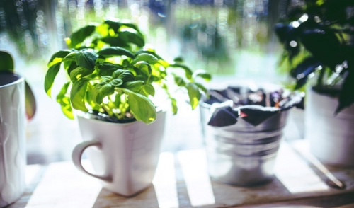 Try a Windowsill Herb Garden