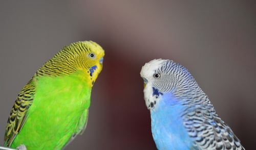 Choosing a Good Bird Veterinarian