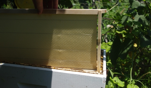 How Do You Start Beekeeping?