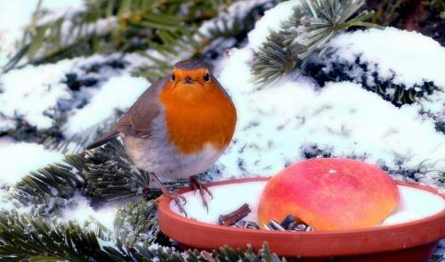 Getting Wild Birds Ready for Winter