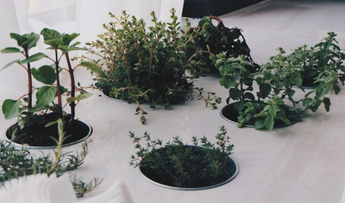 Indoor Gardening for the Colder Months