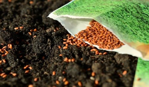 Starting Seedings Indoors to Kick Start Your Garden