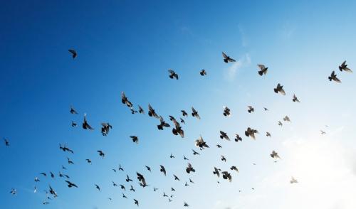 How Birds Migrate