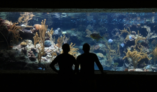 How Much Do You Know About Aquarium History?