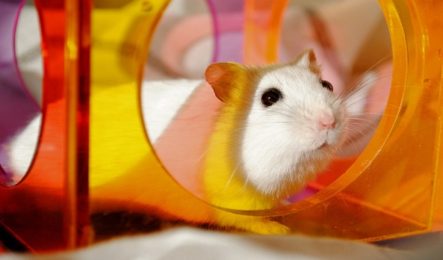 Caring for My Hamster
