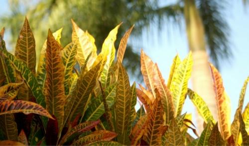Best Garden Plants For Warmer Climates