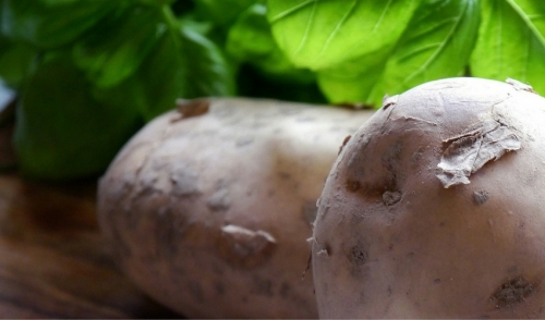 Guide to Planting Seed Potatoes