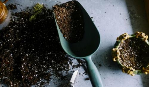Test Your Soil's pH Level