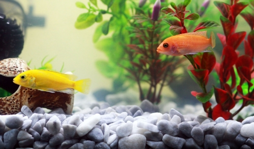 How to Keep my Aquarium Plants From Dying