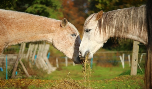 Nutrition Tips for Your Senior Horse