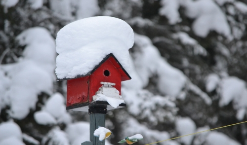 Winter Care Tips for Wild Birds