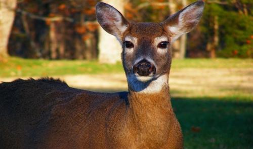 Natural Ways to Deter Deer