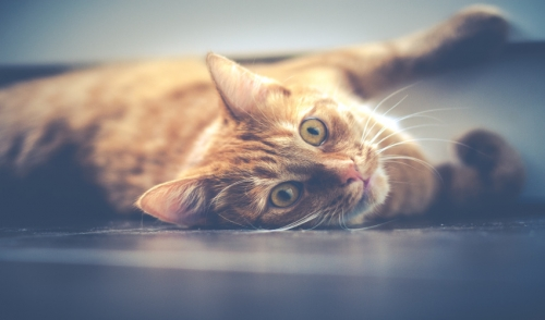 What Is Catnip and Why Do Cats Go Crazy for It?