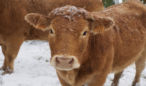 Protecting Your Livestock from the Harsh Winter