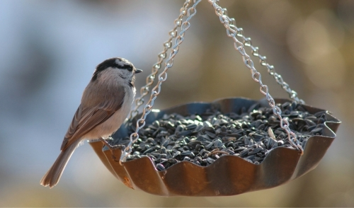 10 Best Bird Feeding Tips