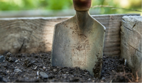 Are You Testing the Soil for Your Plants and Vegetables?