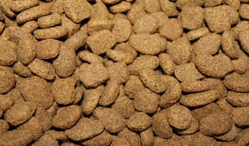 Should You Be Changing Your Pet's Food Regularly?