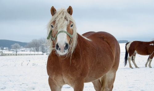 Winter Horse Care Checklist