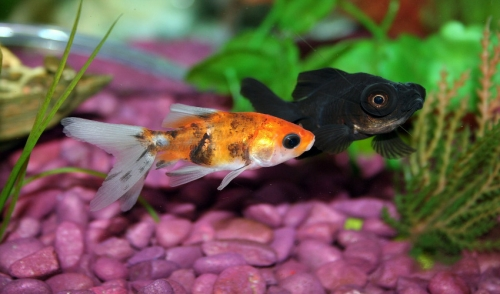 Steps to Take Before Adding Fish to a New Tank