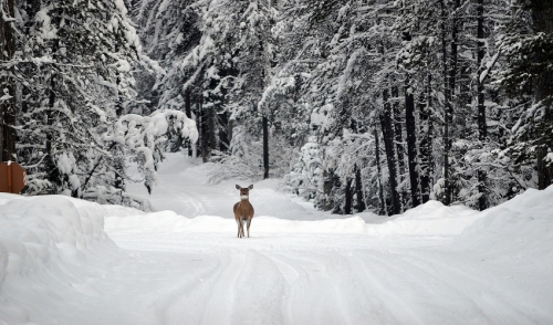 Winter Nutrition for Whitetails