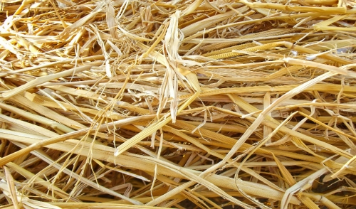 Five Factors of Hay Quality