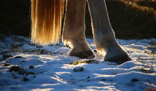 Preventing Snowballs in Your Horse's Hooves