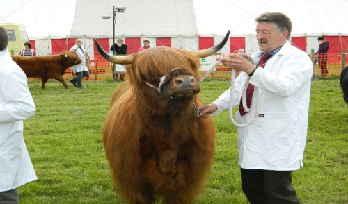 Show Season: Tips for Preparing Your Animals