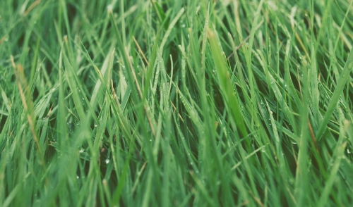Caring For Your Lawn in the Spring