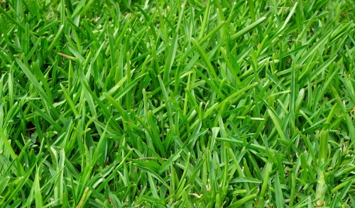 Attacking Crabgrass and Maintaining a Crabgrass-Free Yard This Year