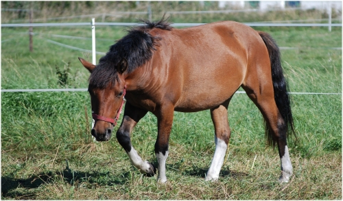 5 Steps to Stop Your Horse From Pawing