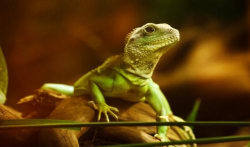 Reptile Health Checklist – Annual Reptile Home Health Exam
